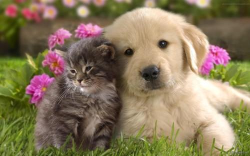 catpuppy